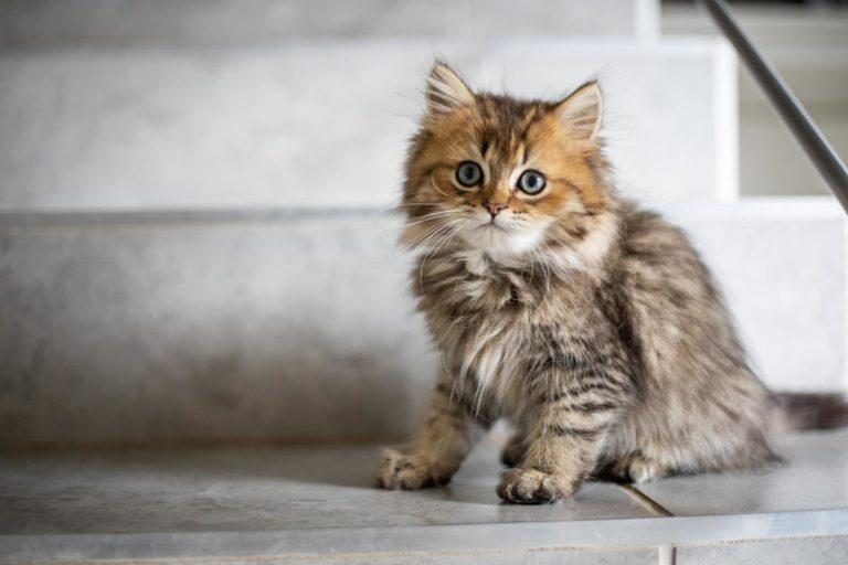 Karmienie kota wysokiej jakości karmą to podstawa jego zdrowia